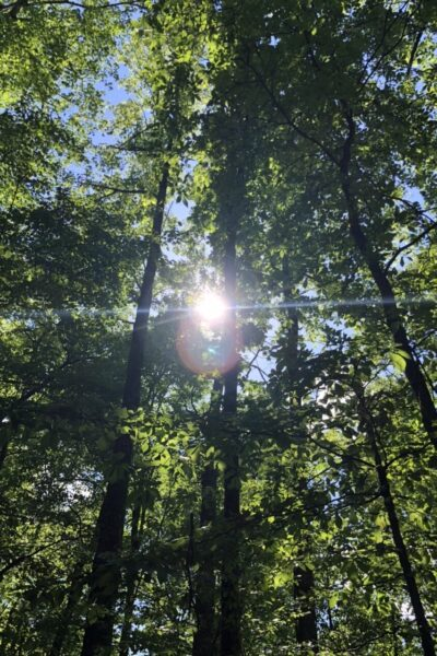 Sunlight shining through trees in the woods